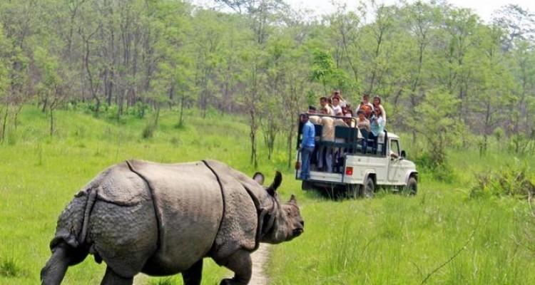 skypark holidays-Jungle Safari